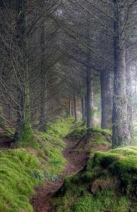 A mossy trail
