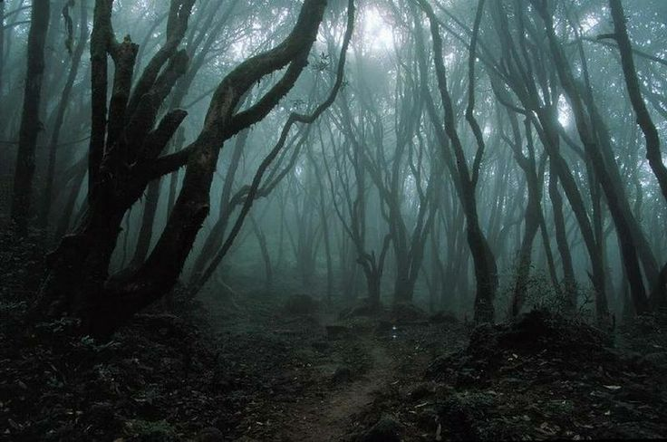 Image result for spooky path