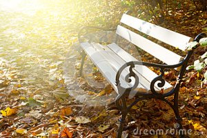 empty-bench-autumn-park-white-sunny-42232130