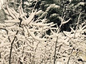 BranchesSnow