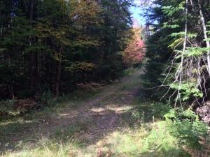 Dark Lane 4 Blog