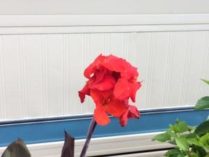 RV flower