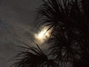 Moon&Palm