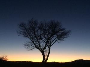 TucsonTreeSunset